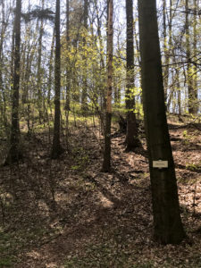 Vrchol Kozlov - Cidlinský hřbet